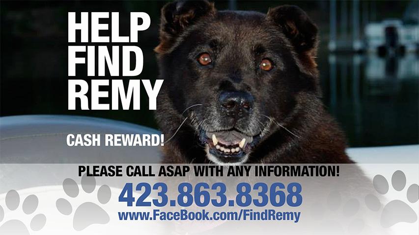 Help find Remy!!!
